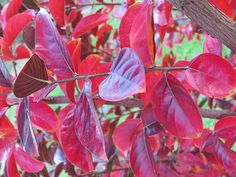 Autumn Reds Photograph by Tammy Finnegan