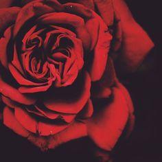 I have rose coloured glasses the frames thorns! #5uryagraphy   #pune #puneinstagrammers #flower #flowers #red #green #naturelovers #naturelover #rose #nikon #natgeo #natgeotravel #natgeocreative #lonelyplanet #lonelyplanetindia #betterphotography #India #Indian #earthpix #november #love #faith #lovely