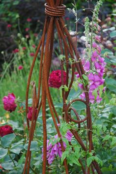 Tuckshop Gardener. Falstaff rose and foxgloves