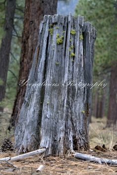 Lake Tahoe, Yvonalicious Photography