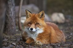 Photograph Wild glance by Olga Gladysheva on 500px