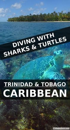 Diving with Sharks and Turtles in Trinidad & Tobago! With often strong tidal currents the nutrient rich dive sites Divers Dream and Divers Thirst are the most spectacular dive sites in the South of Tobago. - Dive o'clock! http://www.diveoclock.com/destinations/Caribbean/Tobago_CrownPoint/ underwater   ocean   sea life   diving   coral reef    dive the world   scuba diver   dive instructor   underwater photography   duiken   tauchen   under the sea   Caribbean   marine conservation   marine…