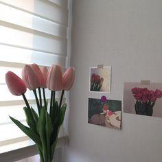 Nature Aesthetic, Korean Aesthetic, Flower Aesthetic, Pink Aesthetic, Tulips Flowers, Real Flowers, Planting Flowers, Beautiful Flowers, Giving Flowers