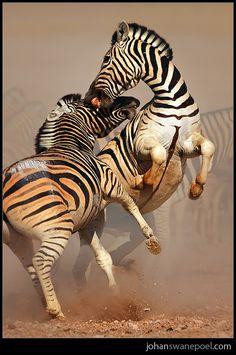 Amazing shot! - via Johan Swanepoel's photo on Google+