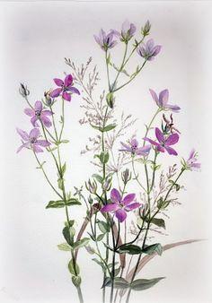 Ботанические иллюстрации Mary Vaux Walcott. Обсуждение на LiveInternet - Российский Сервис Онлайн-Дневников