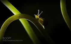 Trans-lucide by magalilandry0198 #nature #photooftheday #amazing #picoftheday