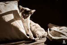 Serenity of the Dreamer The Dreamers, Serenity, Photo Galleries, Explore, Gallery, Cats, Animals, Gatos, Animales