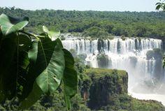 Rainforest in the Iguaçu Falls, Brasil.