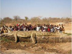 animals and humans - large crocodille killed in Nigeria - TodaysFun ... Worlds best funny pictures collection