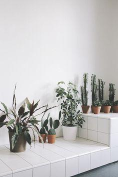 amazing indoor garden with cactus