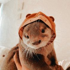 Baby Animals Super Cute, Cute Little Animals, Cute Funny Animals, Otters Funny, Funny Ferrets, Otters Cute, Chinchillas, Baby Animals Pictures, Cute Animal Pictures