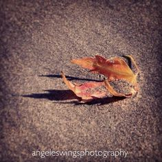 Angeles Wings Photography | What is Lyme Disease?