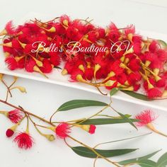 Red eucalyptus flowers, dried or fresh eucalyptus blossom, florist craft supplies, gumnut blossom flowers, Australian native flowers This 50g bag of natural loose eucalyptus flowers is perfect for many different craft projects Add them to floral displays, wreaths, bowls or decorations to bring