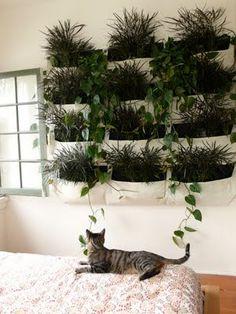 plant sacs on the wall