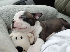 Puppy sleeping with its toy