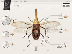 Insect definer - Yael Cohen