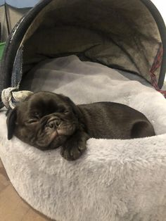 """Fantastic """"black pug"""" information is available on our website. Black Pug Puppies, Pug Pictures, Dog Photos, Super Cute Puppies, Cute Dogs, Pug Love, I Love Dogs, Pug Information, Dogs"""