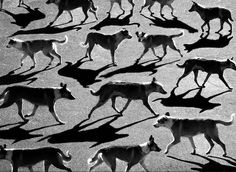Alexey Bednij is a photographer who manipulates photos of people and animals in oder to make these unique shadow portraits that he refers to as 'collages'. He is based in Russia. via My Modern Met Shadow Photography, Pattern Photography, Dark Photography, Black And White Photography, Silhouette Photography, Minimalist Photography, Andre Kertesz, Shadow Portraits, Shadow Photos