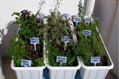 Φτιάχνω μποστανάκι για βότανα και αρωματικά   Θέματα   Bostanistas.gr : Ιστορίες για να τρεφόμαστε διαφορετικά