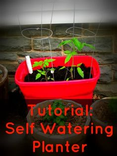 DIY Self-Watering Planter tutorial from #Walmart Mom Jenn.