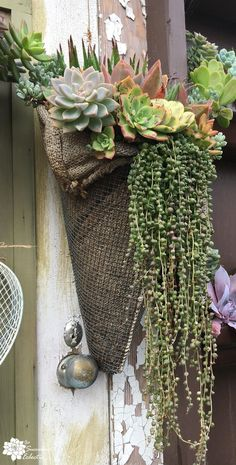 Easy To Grow Houseplants Clean the Air Hardware Cloth And Burlap Make For A Cool Wall Sconce Over Flowing With Succulents Taken At The Succulent Cafe Succulent Wall, Succulent Gardening, Garden Pots, Container Gardening, Succulent Display, Vegetable Gardening, Succulents In Containers, Cacti And Succulents, Planting Succulents