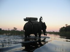 Abu Camp Elephant Rescue and Orphanage - sunset  This is actually Botswana!