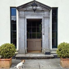 Keeping guard at the entrance to Killinardrish County Cork. The house probably dates from the 1830s when mentioned by Samuel Lewis in his 'Topographical Dictionary of Ireland' but early photographs do not show the pedimented limestone doorcase and sidelights so these must have been added at some date in the last century. #Ireland #Eire #Killinardrish #Cork #IrishCountryHouse #Dog theirishaesthete.com