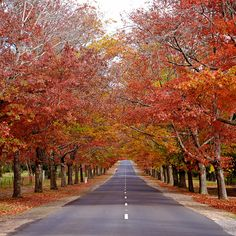Reminds me of Boston in the Fall!  I would spend the whole season there if I could.  Beautiful!