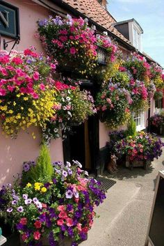 No front garden footage?border your front walls with overflowing colourful flowers in pots and hang up a selection of beautiful hanging baskets! Window Box Flowers, Balcony Flowers, Window Boxes, Flower Boxes, Beautiful Gardens, Beautiful Flowers, Beautiful Places, Beautiful Bouquets, Hanging Flower Baskets