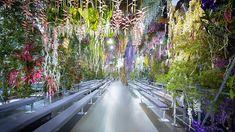 dior flowers - Google 검색