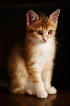 Orange on black.  Pretty kitty.