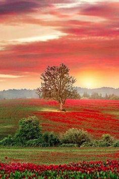 Field of red Adventure   #MichaelLouis - www.MichaelLouis.com