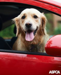 You can turn your old car, boat, truck or other vehicle into a charitable contribution for animals. It's so easy, and all types of vehicles—in any condition or location—are accepted, whether they're running or not. Learn more here: http://www.aspca.org/news/aspca-vehicle-donations-your-used-car-can-help-save-life