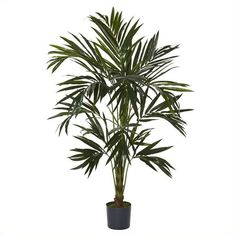 Nearly Natural 6' Kentia Silk Tree (820 HRK) ❤ liked on Polyvore featuring home, home decor, floral decor, artificial silk flowers, faux flowers, artificial flower arrangement, artificial silk trees and fake bouquet