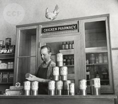 chicken pharmacist - only in Petaluma