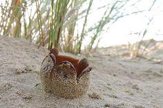 zand tulpje
