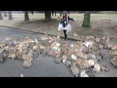 Watch Approximately One Million Wild Bunnies Swarm a Girl With Treats