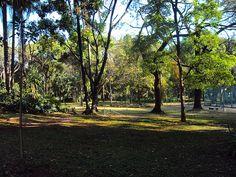 parque municipal de BH, MG, Brasil