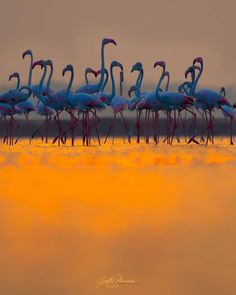 Amazing Photography, Landscape Photography, Animal Kingdom, Good Night, Sony, Wildlife, Sunset, Movie Posters, Instagram