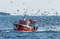 Retour de pêche ! | Flickr - Photo Sharing!