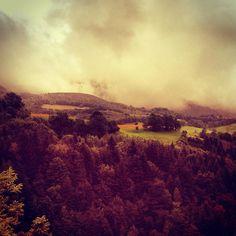 #forest #view #landscape #wald #frankreich #france #tree
