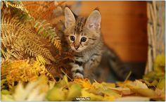 Котенок осенью  #фото #кошки #кошка #кот #Россия #Серпухов #Тула #Москва #СПБ #осень #год #мир #дети #ребенок #котенок #Самара #Хабаровск #Добро #Екатеринбург #animals #cats #cat #animal #kids #kid #russia #moskow #kitty #pet #pets