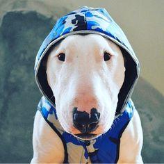 Sem Deus, o universo não é explicável satisfatoriamente.#eistein #bullterrierlovers #bullterrier #1bullterrier #instagram #instadog #instalove #cut #dog #pet #vida #amordacasa #amordepatas #bullterrierpics #bullie #bullterrierinstagram #bullterrierlove #dogs #bullterrierstyle #bullterrierlife #puppy #bullterrierpuppy #englishbull #Raça #ingles #englishbullterrierpuppy #ilovedogs #babys #ebt