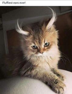 Me encanta los gatos