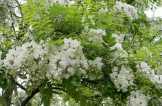 Natural Fence, Parsley, Cukor, Herbs, Nature, Black, Naturaleza, Black People, Herb