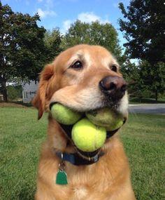 I caught 3 balls!