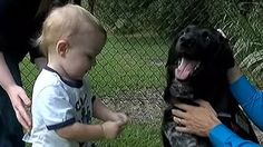 Dog Saves Baby From Abusive Babysitter