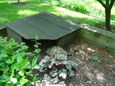 I have seen numerous suggestions for Russian tortoise diet Some great Some awful. Russian Tortoises are nibblers and appreciate broad leaf plants. Tortoise House, Tortoise Habitat, Tortoise Care, Tortoise Turtle, Box Turtle Habitat, Turtle Enclosure, Sulcata Tortoise, Russian Tortoise, Paludarium
