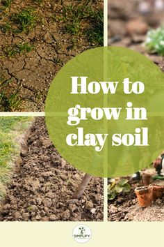 Clay soils hold huge amounts of nutrients, but they really have their issues for plant growth. You can still grow in clay soils by amending them. Otherwise, you will face challenges. Although this won't stop you growing plants. // soil activities // soil lessons // clay soil // soil for succulents potting // soil blocking #soil erosion #adding nitrogen to soil #alkaline soil Amending Clay Soil, Vegetable Garden Soil, How To Make Compost, Soil Improvement, Organic Soil, Plant Growth, Potting Soil, Cool Plants, Growing Plants