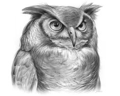 Great Horned Owl - pencil on bristol paper